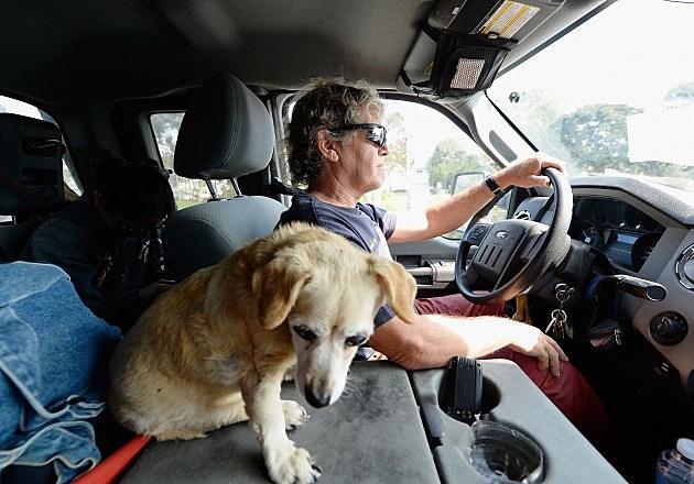 rides to the vet aren't fun