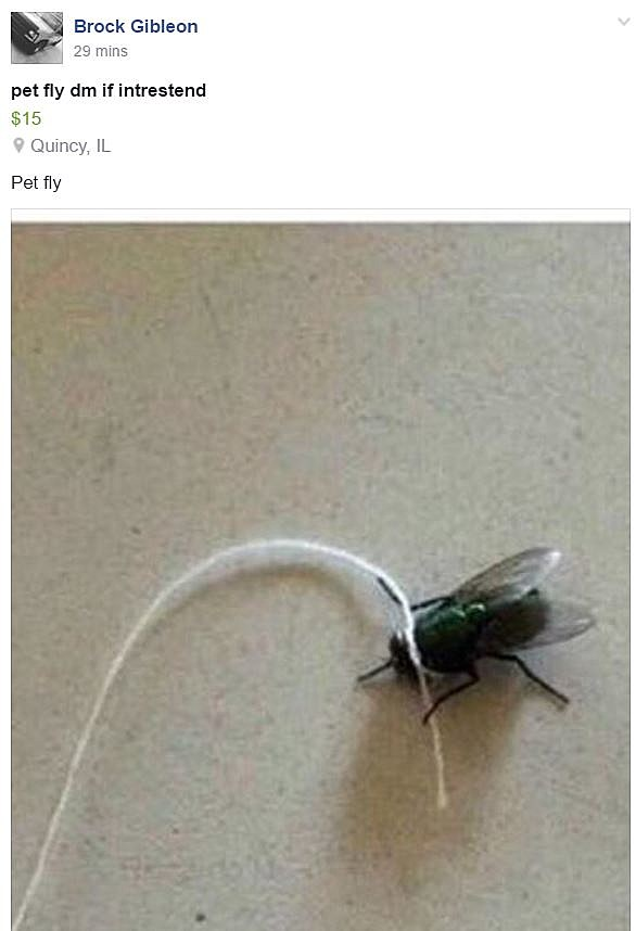 Fly For Sale